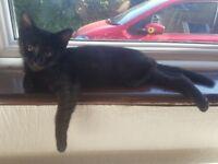 Lovely Female Kitten For Loving Home