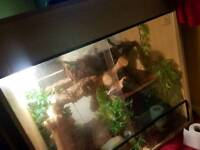 Water dragons and viv for sale