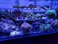 Corals for marine aquarium. Sps. Lps. Zoas.
