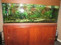 4ft x 15inch fish tank ,plants, fish 2x external filters heaters and cabinet
