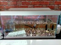 2 ft tropical fish tank with led and oase filter heater