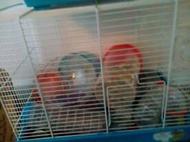 Hamster cage and accessories with food