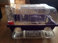 Male Roborovski Hamster - With Cage and Accessories