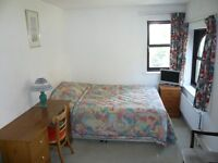 Large room available in Great Location
