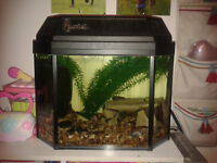 Fish tank with fish and accesories