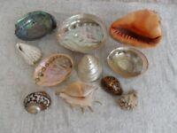 Sea Shells - group of 11 shells