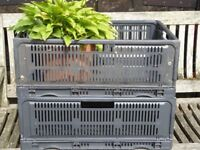 Fold-down storage crates for sale. 220cc Eurocrates.