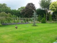 Emerald Garden services. All types of garden landscape in the borders