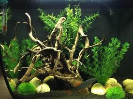 Curved Front Fluval Flex 57L Tank, accessories etc included