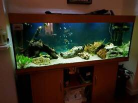 Jewel 5x2x2 tropical set up