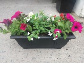 Hanging Baskets/Window Boxes