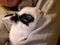 Beautiful Little Rabbit