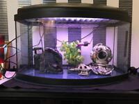 Fish tank with all aquarium kit