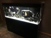 5 foot Fish Tank, Aquael, Discus, Angels, Gourami, Loach, 450l