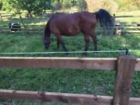 Free horse muck
