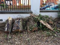 Woods left over from storm Doris