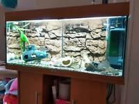 Juwel 200 litre fish tank