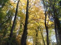Wanted: Woodland to rent for no-trace camping and conservation - Shropshire/Staffordshire/West Mids