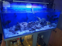 300l Fish Tank - Marine Package