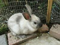 X2 bunnies