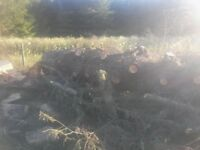 Large tree trunk 2ft at base, free to anyone can chop down for fire wood. Need shifted asap