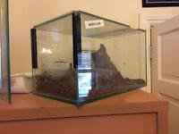 Glass spider terrarium