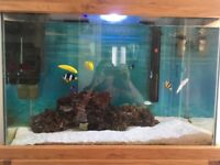 100 litre salt water aquarium **reduced price**