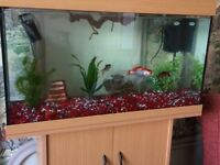 Fish Tank and Cupboard for Sale
