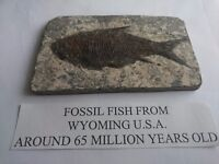 Fossil fish 65 million years old