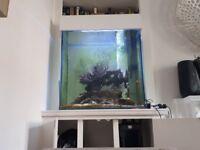Established Marine Aquarium