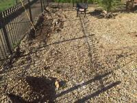Shingle Stones ( 3 tonnes)