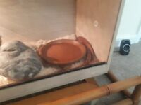 Corn snake and vuvaruum for sale
