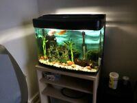 Fish Box 64L Fish Tank Tropical Aquarium