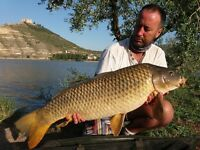 Carp fishing travel partner