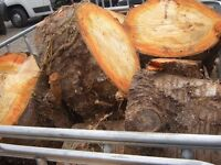 cherry wood firewood logs for smokers bbq