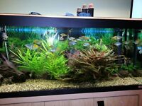 Healthy tropical fish tank for sale