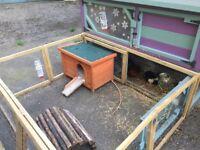 Guinea pigs, hutch & accessories