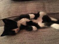 Beautiful sociable kittys