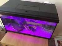 2 foot Juwel fish tank with 4 peacock Cichlids