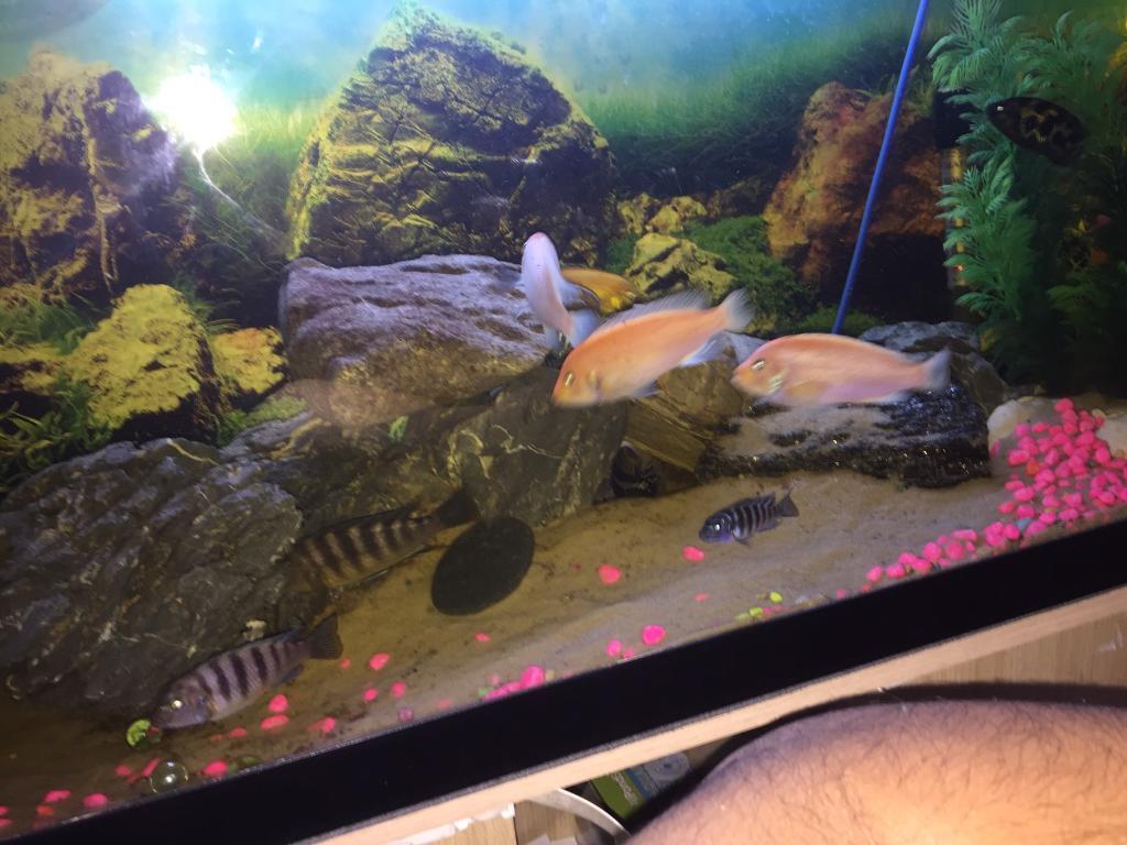Aquarium fish tank for sale in london - Fish Tank For Sale Big Image 1 Of 5