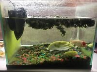 Fish with tank and filter