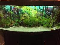 450 fish tank