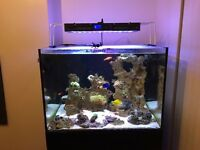 Fish tank for sale L 33.5 D 27.5 H 23.5 opti White glass front