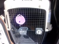 Giant sized Ski Vari dog kennel/travel crate with water bowl and feeds