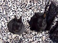 Baby bunnys