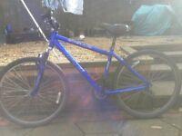 Apollo blue ladies bike