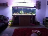 Fishtank