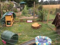 Dwarf and Lion Lop Rabbits for Sale with Hutch, Run and Accessories