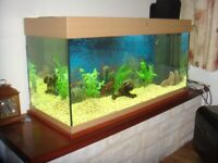Juwel Aquarium Rio 180 ltr with many accessories Glass with Light wood/beech finish