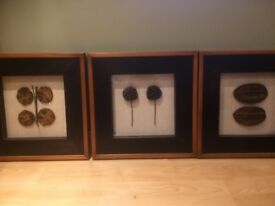 Set of 3 pictures with genuine dried plants,beautifully framed.